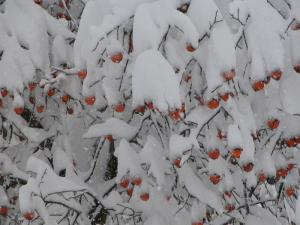 雪(2005-3)
